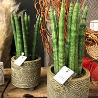 Vente de plantes d'intérieur Seclin
