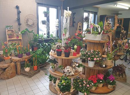 Vente de plantes d'intérieur à Seclin et Wattignies