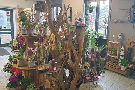 Vente de plantes intérieures à Seclin et Wattignies